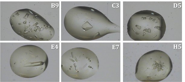 Drop images for six conditions showing crystals of varying morphologies and sizes